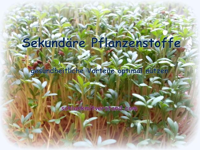 Sekundäre Pflanzenstoffe