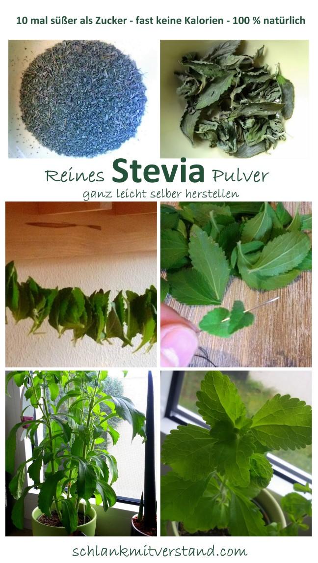 Stevia selber herstellen
