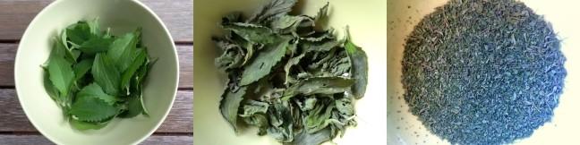 Stevia Blattpulver selber herstellen