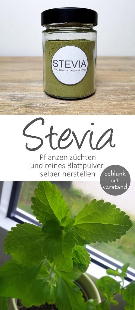 Stevia reines Blattpulver selber herstellen